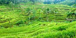 Seminyak - Dana Guesthouse Bali