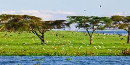 Kenia, Safari Samburu