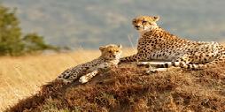 Kenia, Safari Kiboko