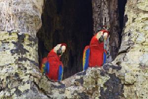 Naturaleza de Costa Rica y Panamá