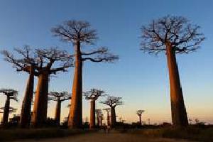 Madagascar: Tierras Malgaches