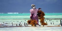 Zanzibar, un nom qui fait rêver...