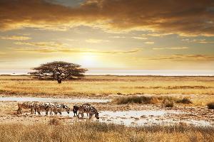 I LOVE AFRIQUE DU SUD - 12J/9N - HIV17/18