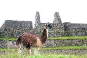Gran Tour de Perú