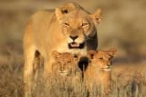Echappée africaine, grands espaces et safaris