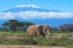Du haut du Kilimandjaro
