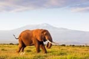 Safaris Légendaires