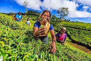 Sri Lanka, l'île aux Joyaux