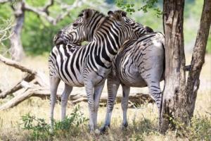 Safaris au Kruger : que du bonheur !