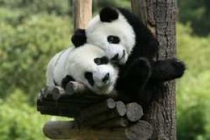 China: El País de los Pandas