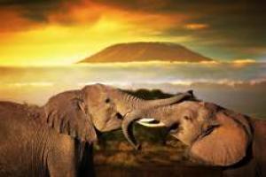 Sudáfrica Romántica y Mauricio, Especial Novios - Venta Anticipada