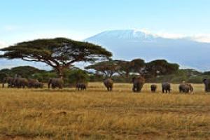 Mon safari au Kenya