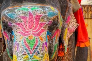 Circuit Splendeurs de l'Inde du Nord 3*