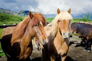Autotour L'Islande en Famille